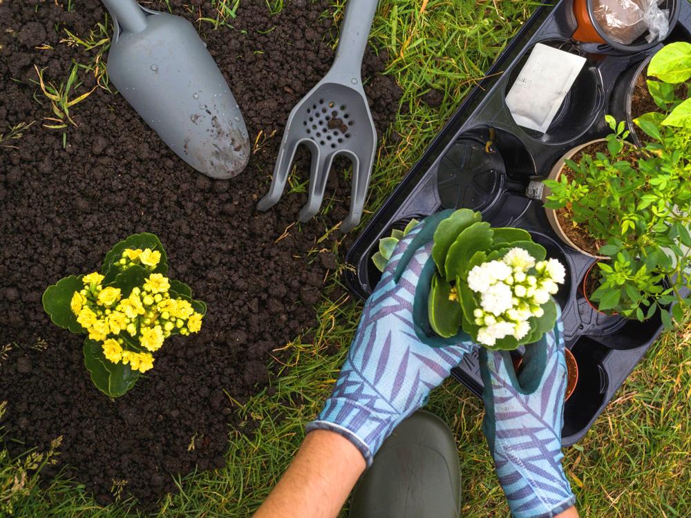 Cuidar do jardim pode ser uma ótima atividade ao ar livre