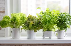 Horta vertical: dicas para fazer na sua casa