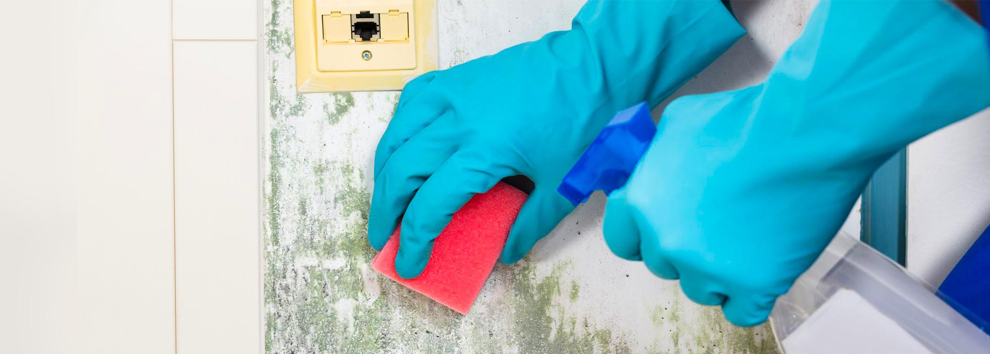 Descubra o que fazer para tirar bolor e mofo das paredes da sua casa