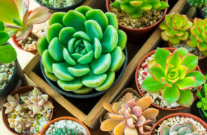 Aprenda a fazer arranjos de suculentas e renove a decoração da sua casa